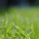 Лучший дизельный внедорожник: плюсы и минусы кроссоверов, критерии выбора