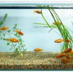 Освящение и уборка аквариума