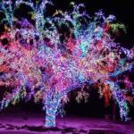Особенности украшения деревьев гирляндами